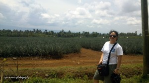 The Del Monte Gold pineapple plantation. Yummy!