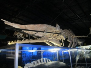a huge, huge sperm whale skeleton