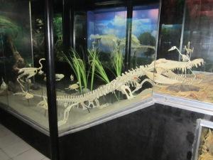 crocodile's skeleton in action