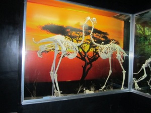 a pair of ostrich skeletons with an artistic backdrop