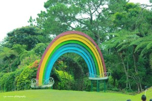 the rainbow arc in the flower garden