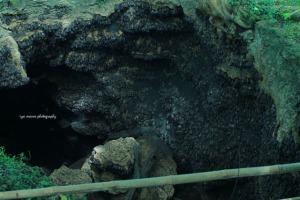bat cave opening and bats, lots of 'em.